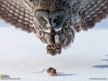 National-Geographic-abril-2013-02-600x450